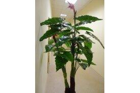 Д5708 - Дерево с тропическими цветами
